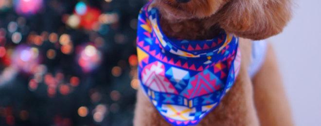 東京都大田区のペットサロン・トリミング☆トイプードルのテディベアカット,クリスマス写真 DEAR DOG