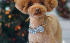 東京都大田区のトリミング・ペットサロン☆トイプードルのアフロカット クリスマス写真 DEAR DOGS
