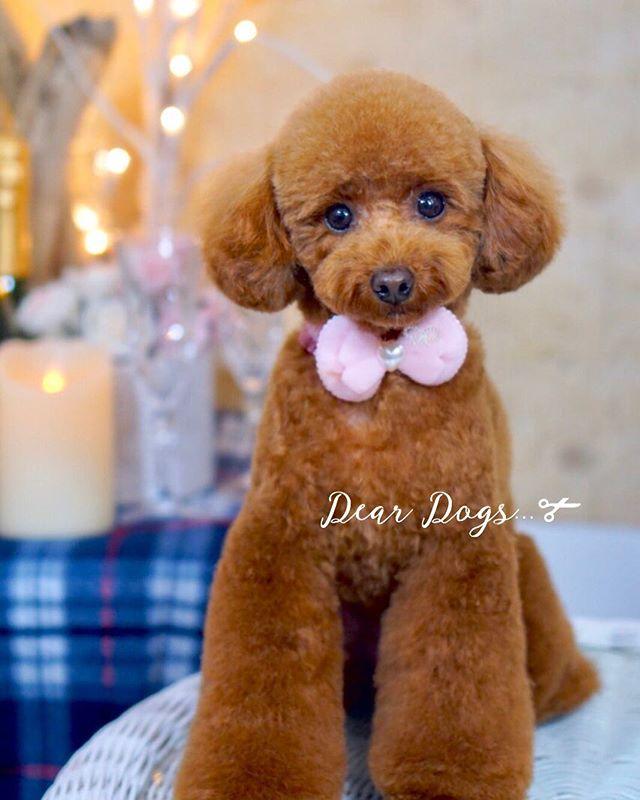 ご来店ワンちゃん☆大田区洗足池のペットトリミングサロンDEAR DOGS