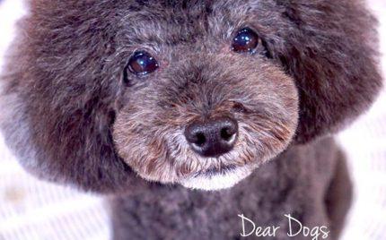 ご新規様キャンペーン!大田区洗足池ペットトリミングサロンDEAR DOGS