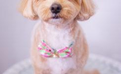 大田区のトリミングサロンDEAR DOGS☆ミックス犬