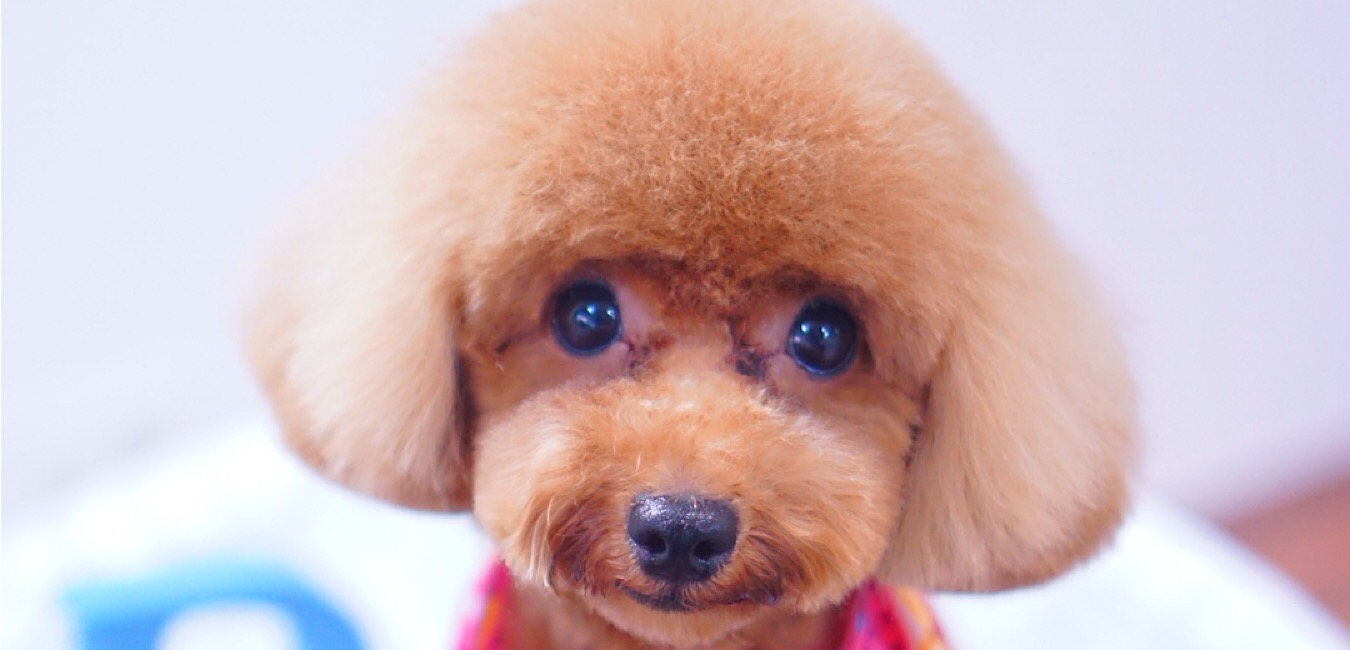 予約状況☆大田区洗足池トリミングサロンDEAR DOGS