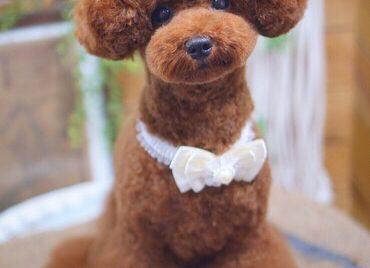 トイプードルのショートイヤーテディベアカット☆大田区「洗足池 石川台 久が原 」ペットトリミングサロンDEAR DOGS